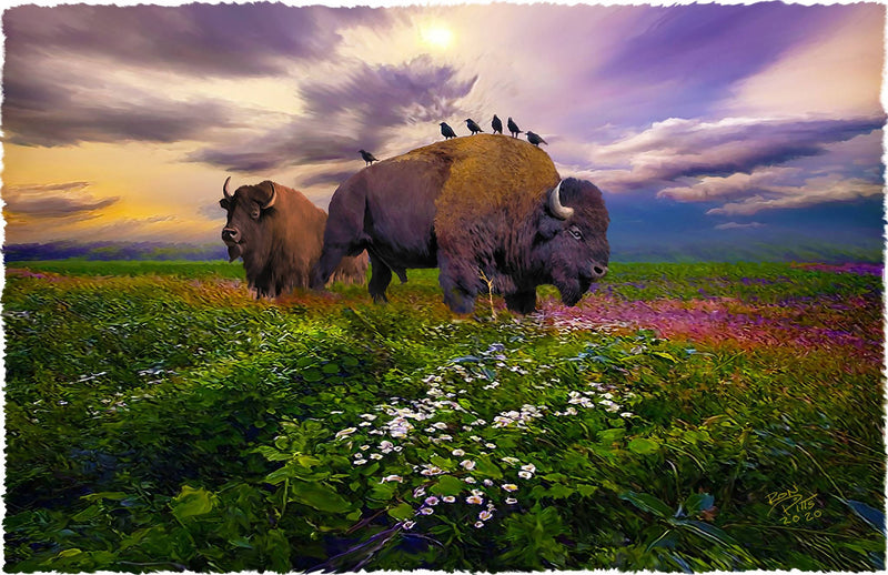 "11X17 ART PRINT--""BIRDS AND BUFFALO"""