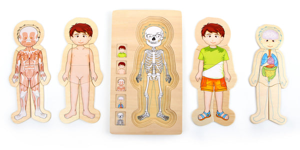 small foot - Layer Puzzle Anatomy Boy