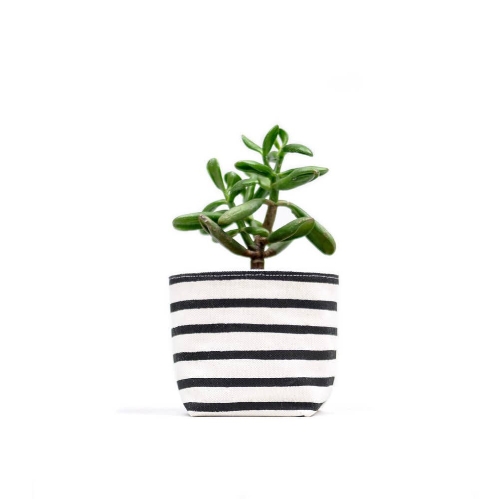Black Stripe Canvas Planter—4""