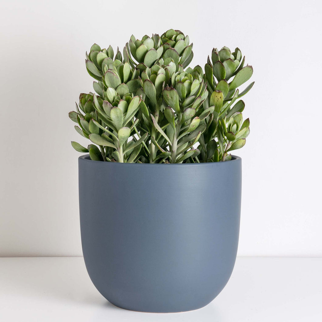 Ceramic Egg Planter - Blue