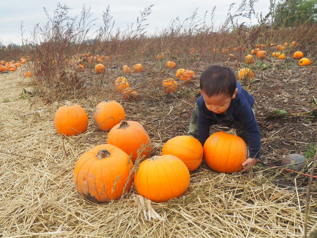 Family Adventures: Pumpkin Picking