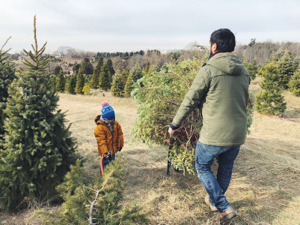 Another Christmas Tree Adventure