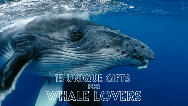 Whale Themed Gifts For Whale Lovers