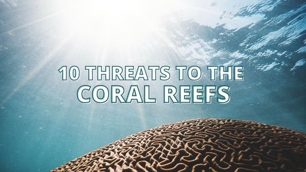 10 Threats to Coral reefs