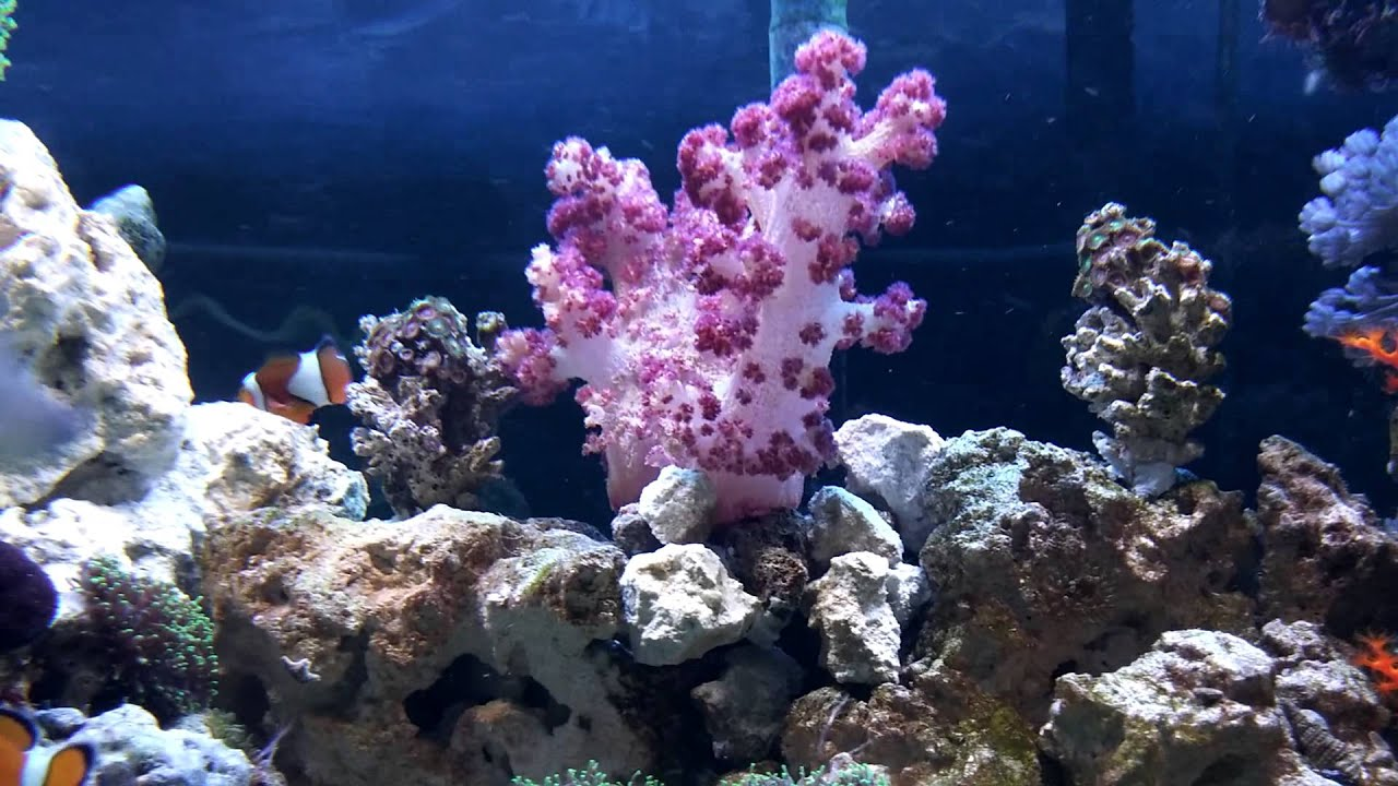 Coral types you should see