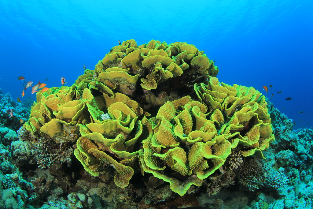 Interesting types of corals