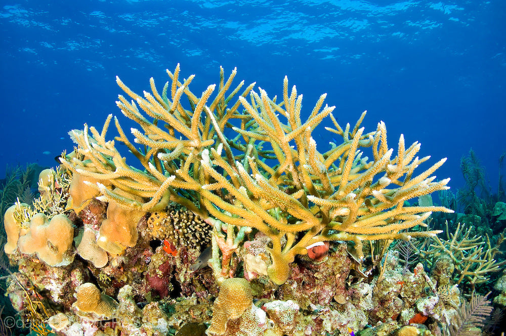 Coral types found in the ocean