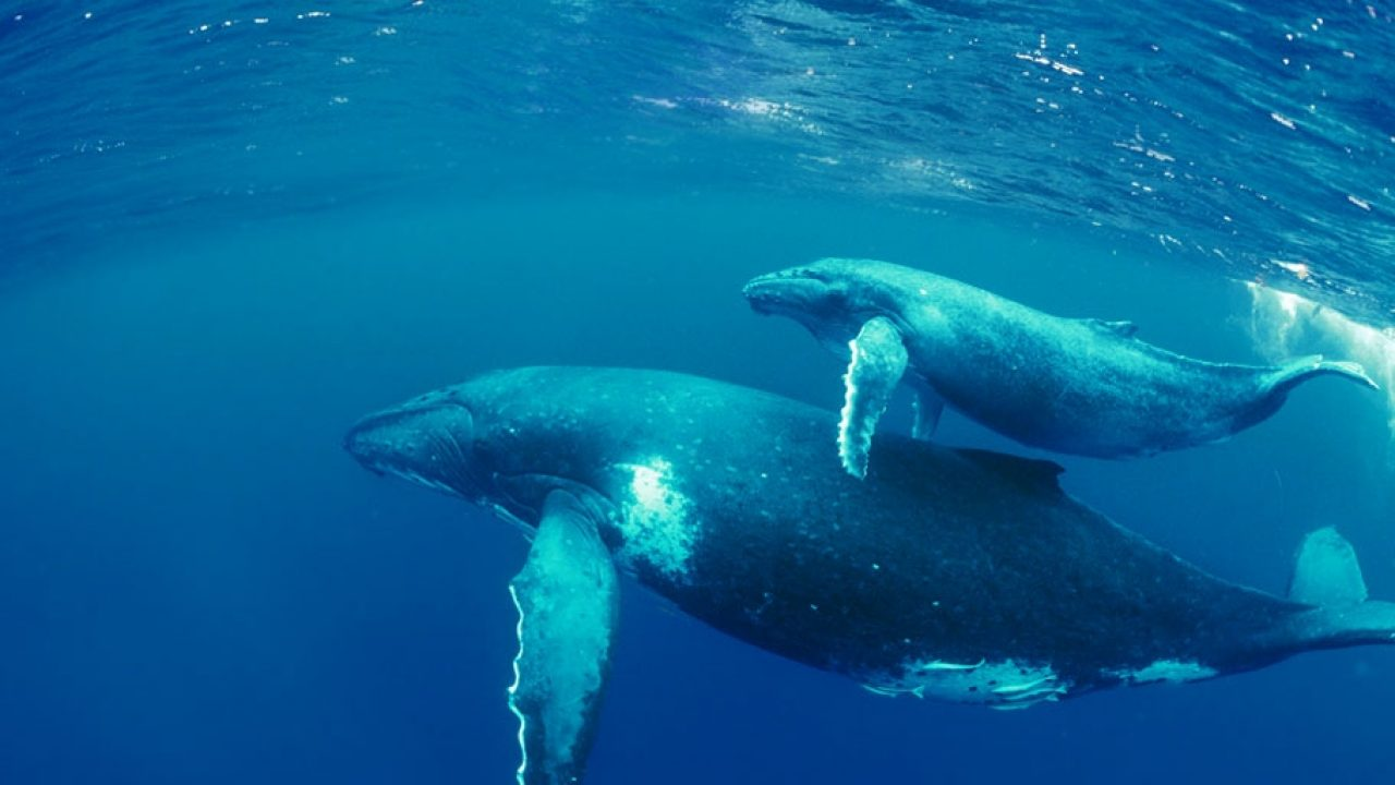 Amazing biggest whales in the world