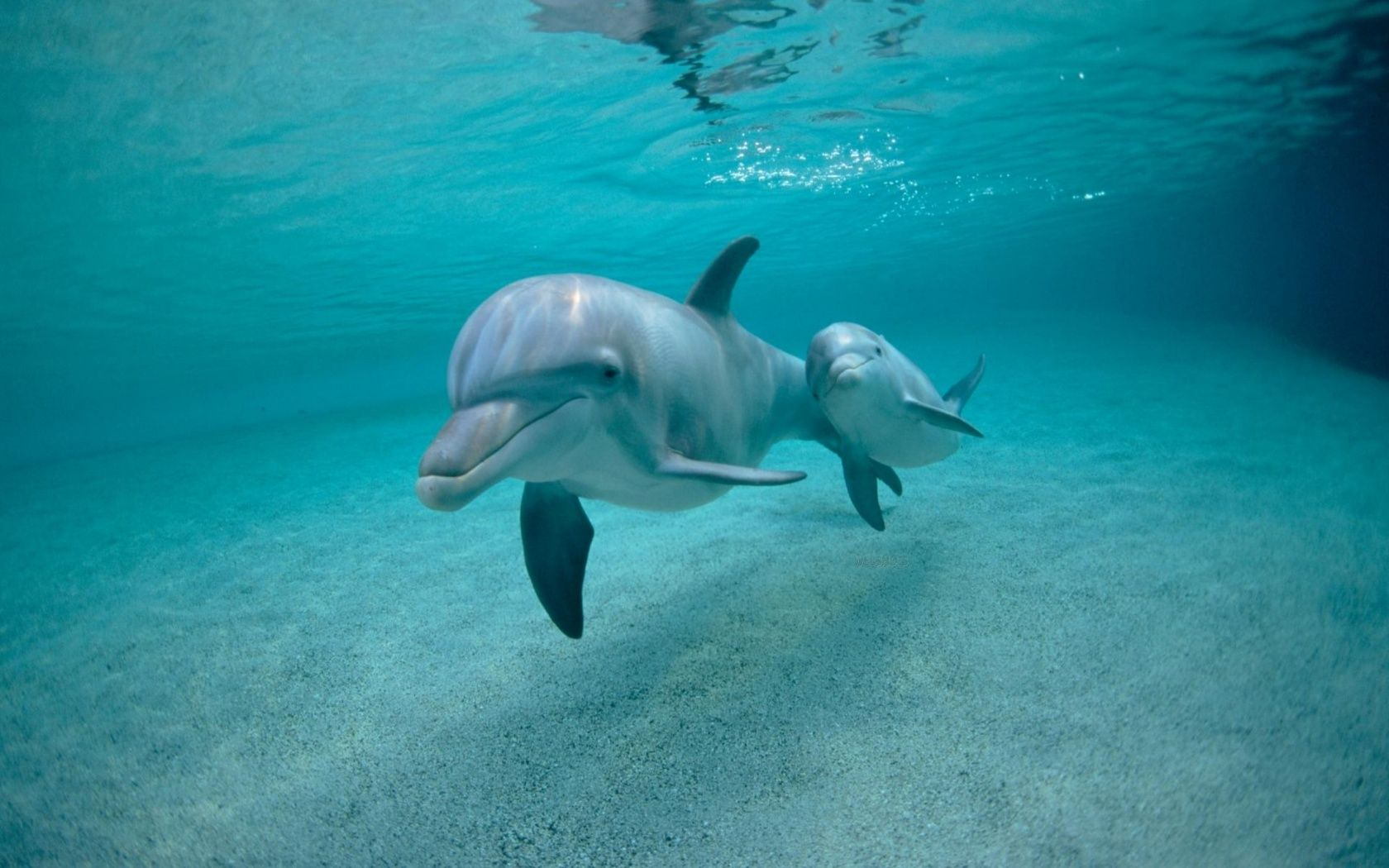 Are dolphins whales