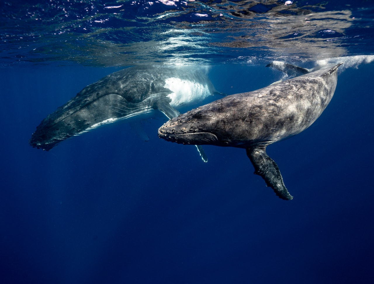 Biggest whales in the world