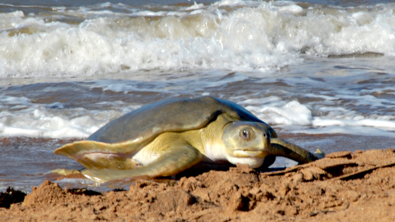 Interesting facts on what sea turtles eat