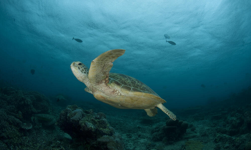 What do sea turtle eats facts