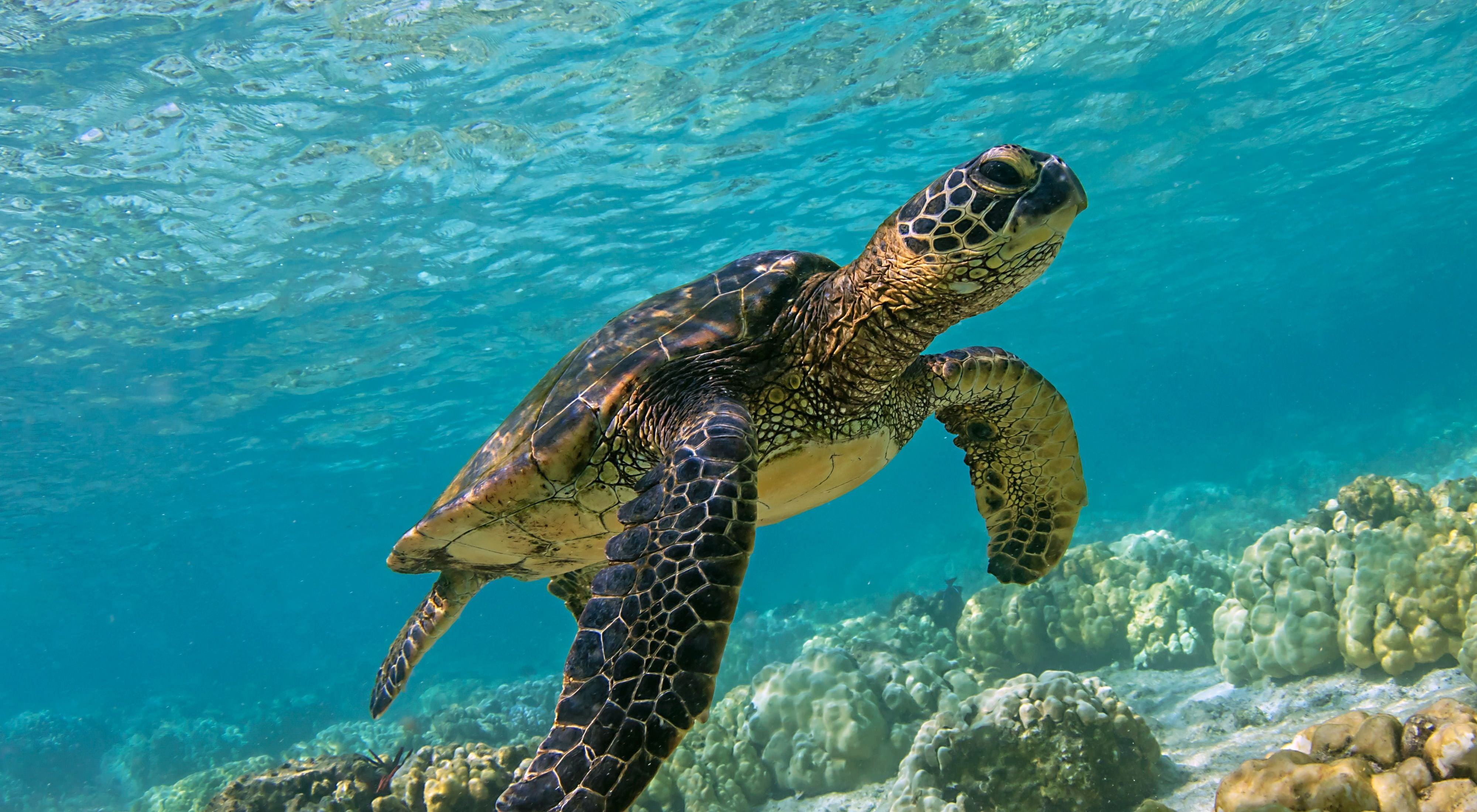 Facts on how long turtles live