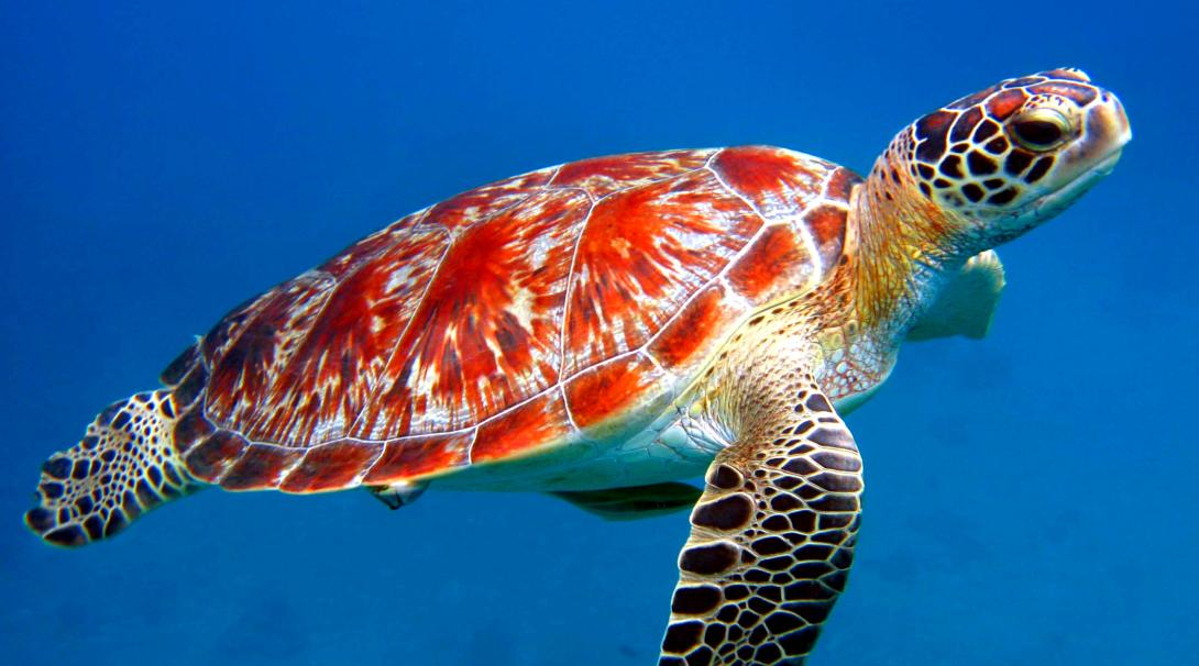 How long do turtle live facts