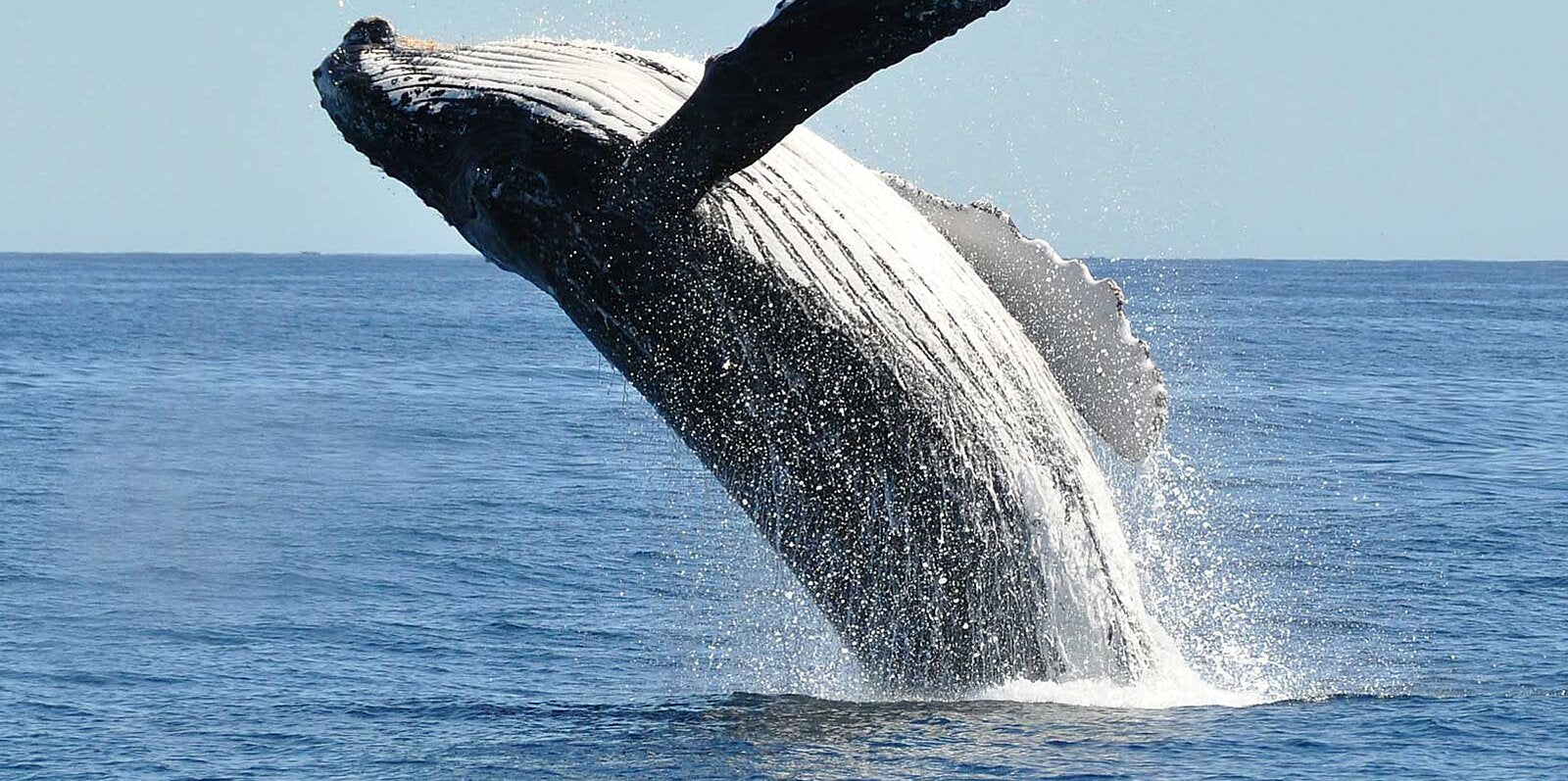 Amazing types of whales