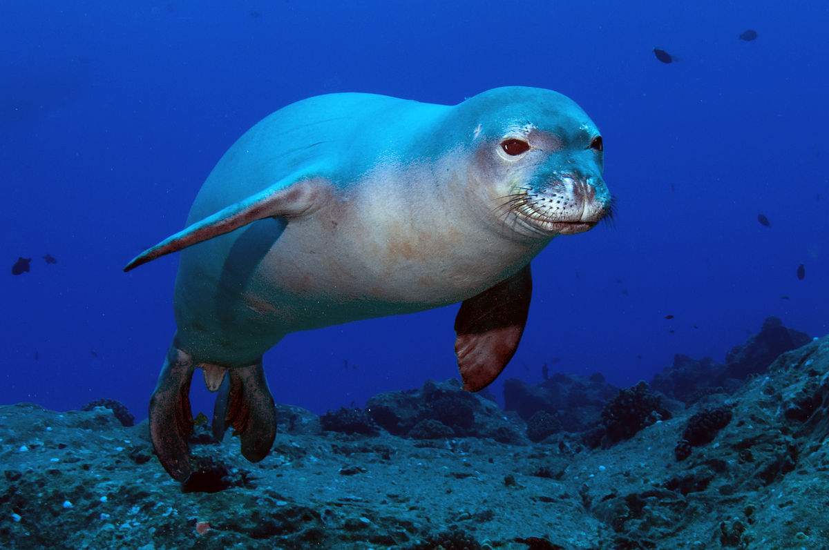 Ocean animals that are starting to extinct