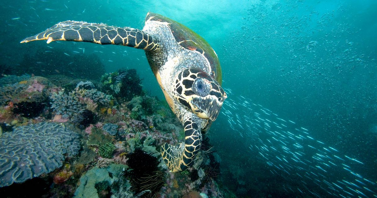 Facts about what do sea turtles eat