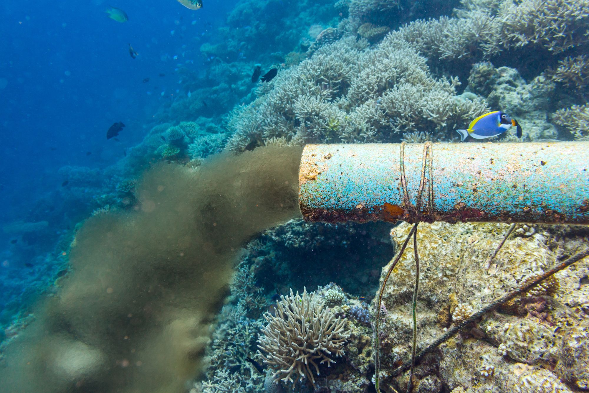 Heartbreaking causes and effects of ocean pollution