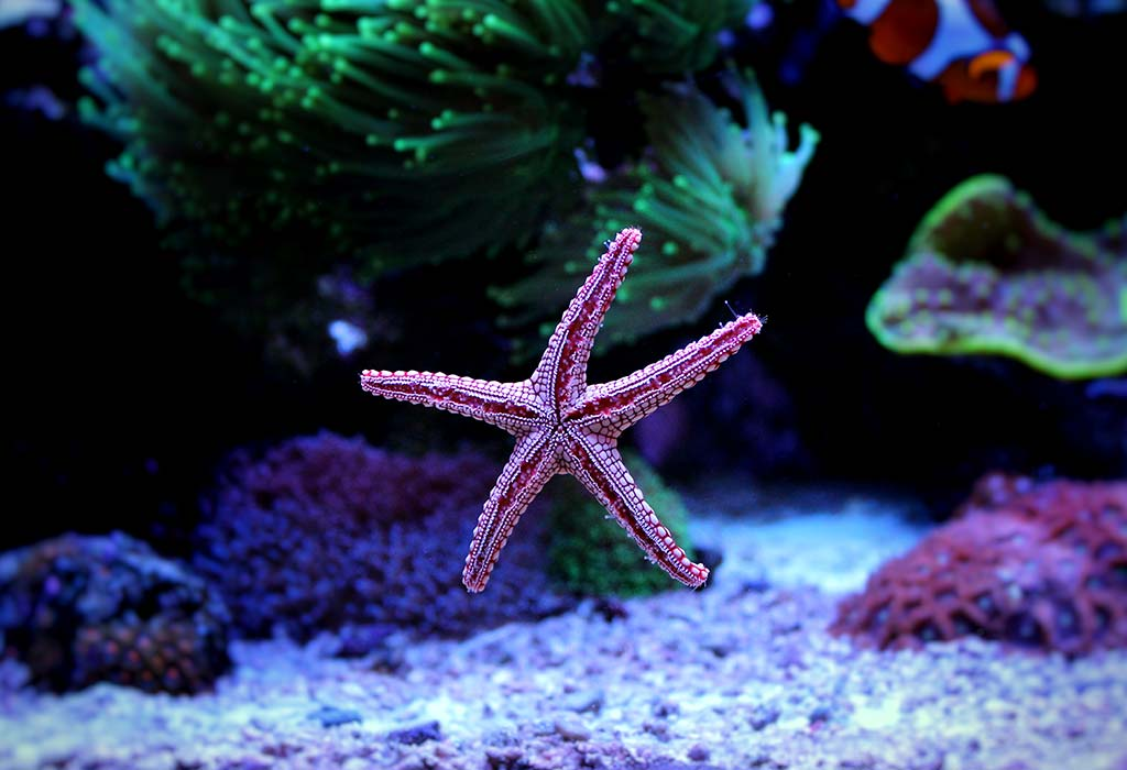 Amazing how long do starfish lives facts