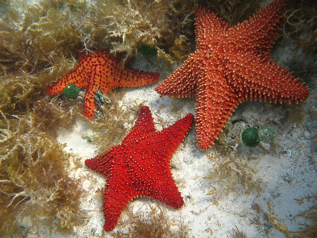 How long do starfish lives facts