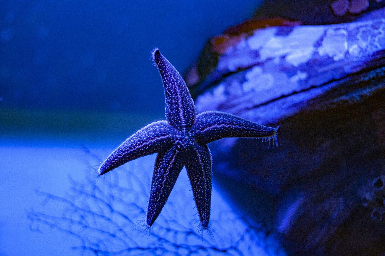 Different awesome types of starfish