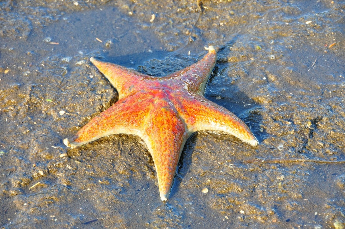 Awesome types of different starfish