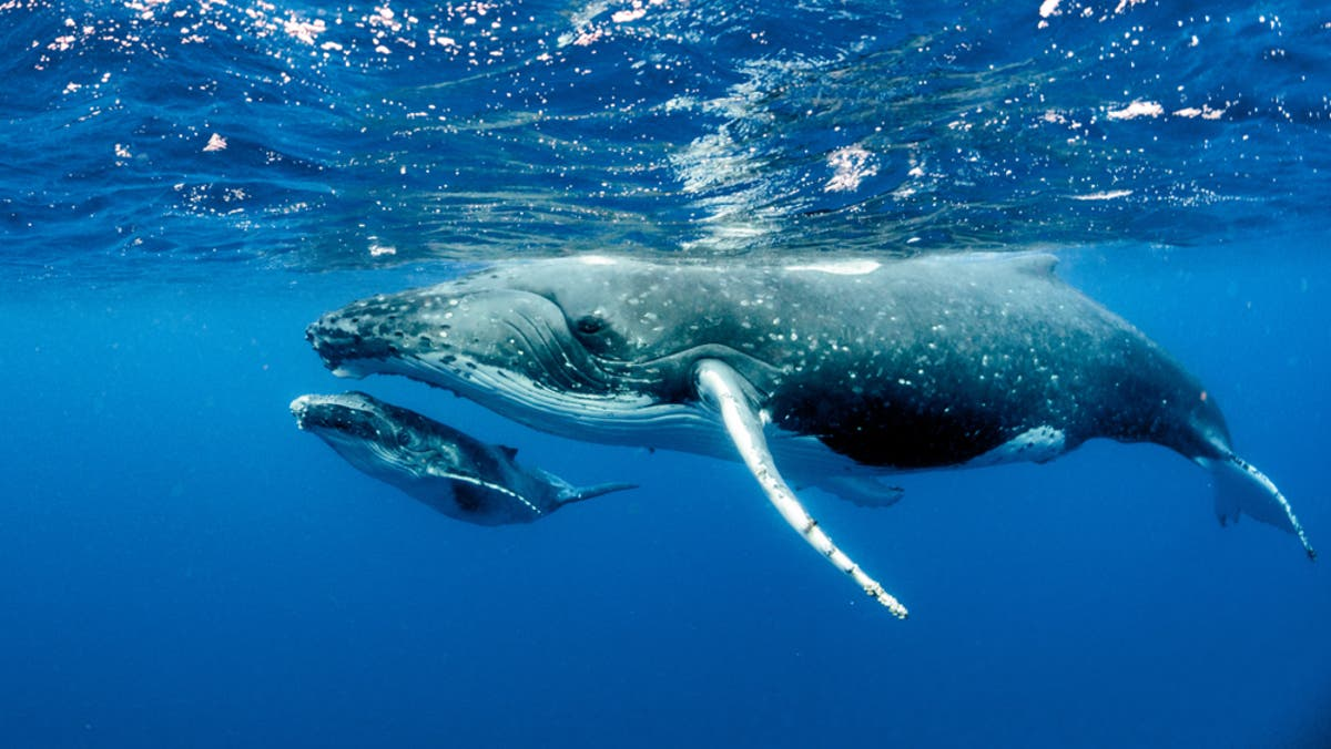 Are blue whales endangered