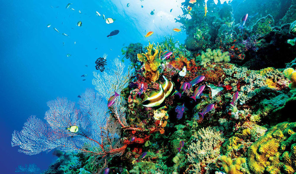 Awesome facts about coral reefs