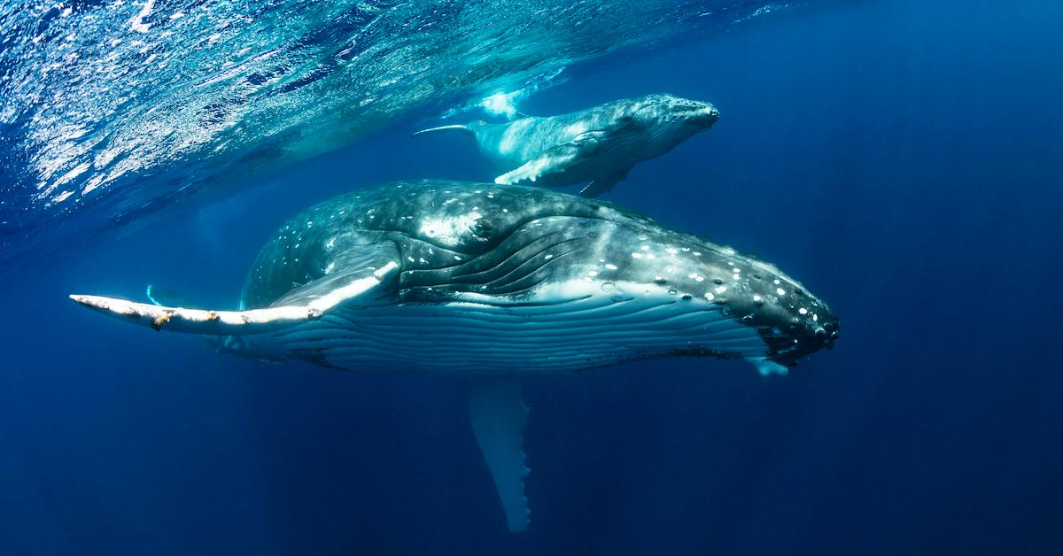 Surprising biggest whales in the world