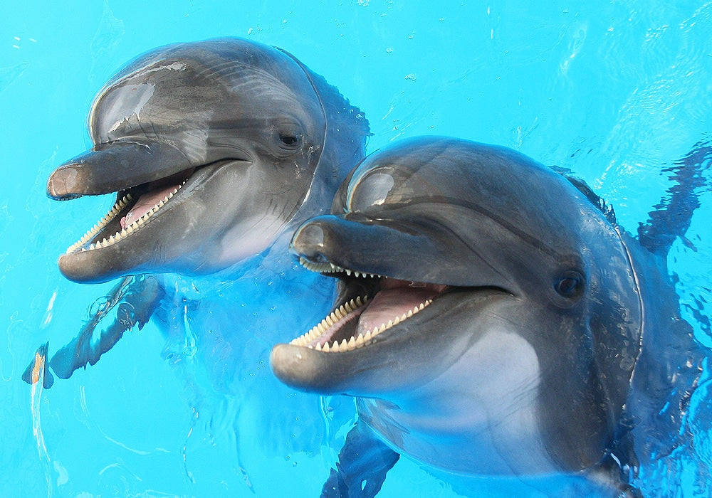 Fascinating dolphin facts
