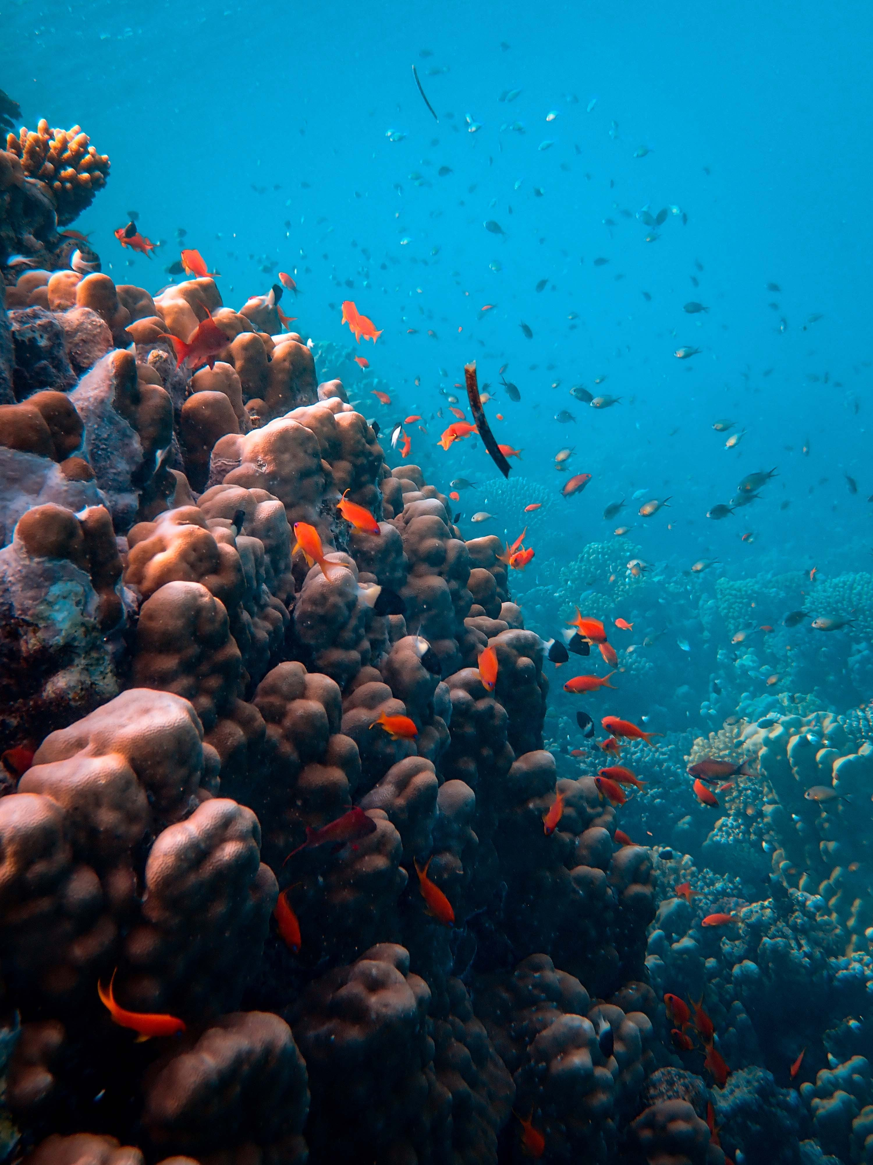 Let Save The Coral Reefs