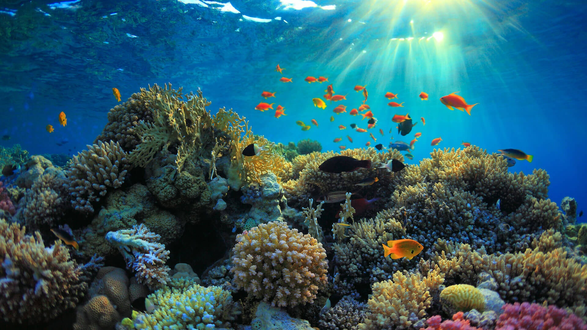 Interesting coral reef facts