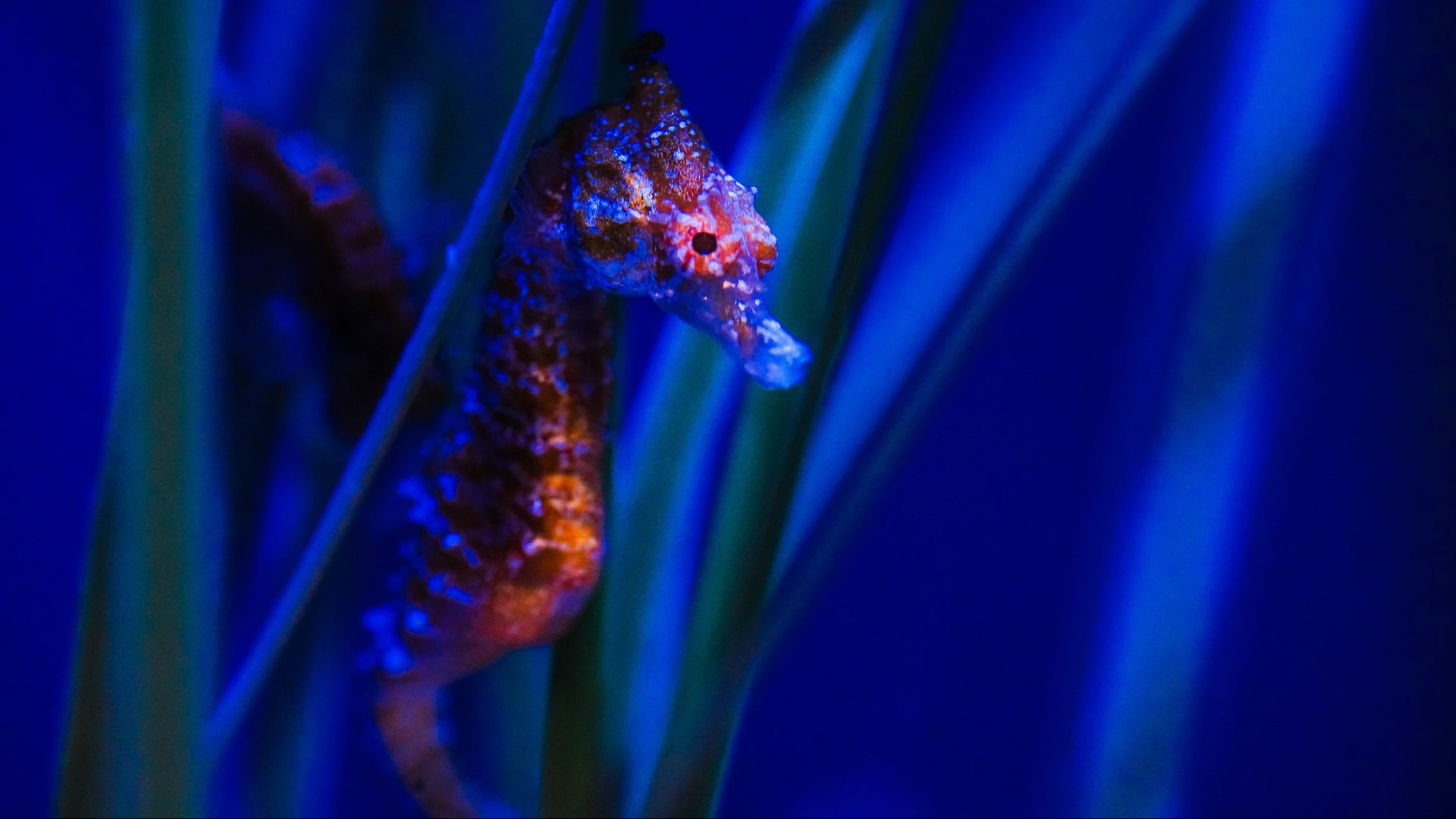 Interesting fun facts about seahorses