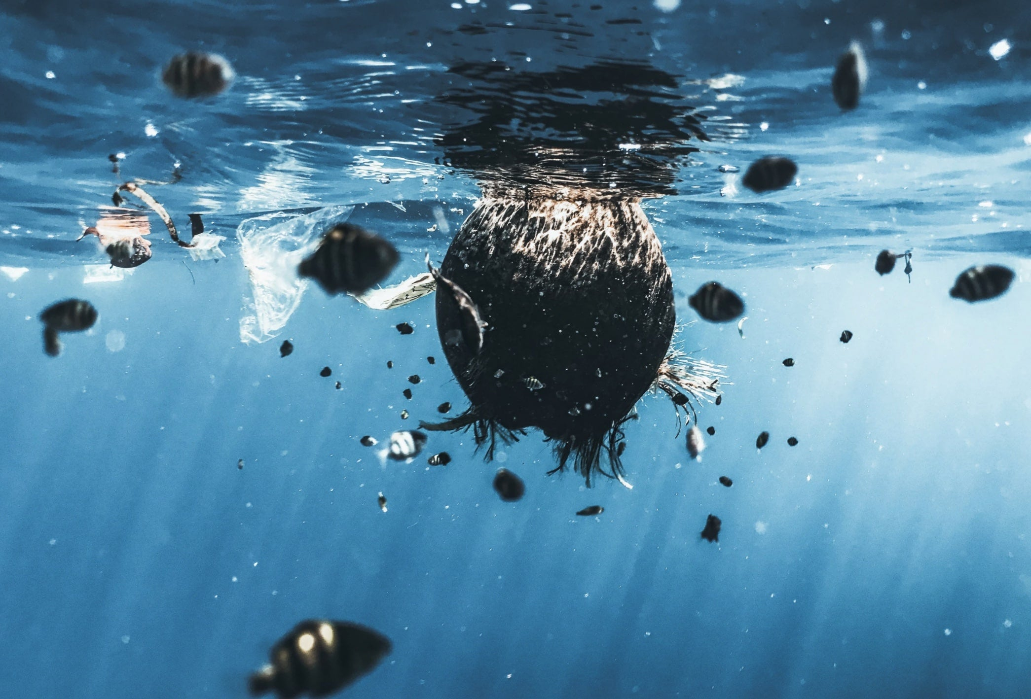 Ways to reduce Ocean Pollutions