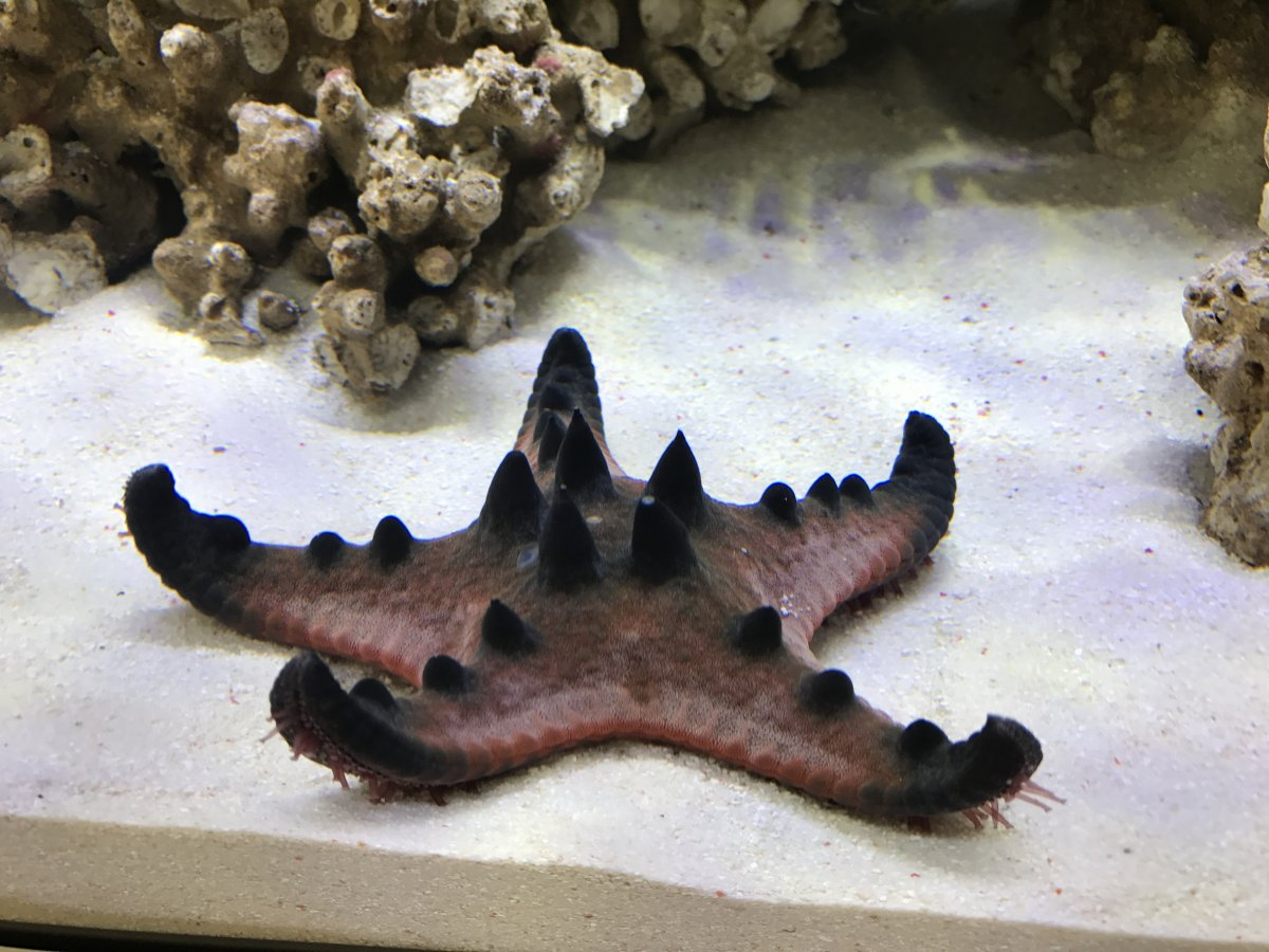 Awesome starfish types