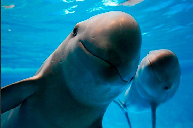 Ocean animals that are endangered