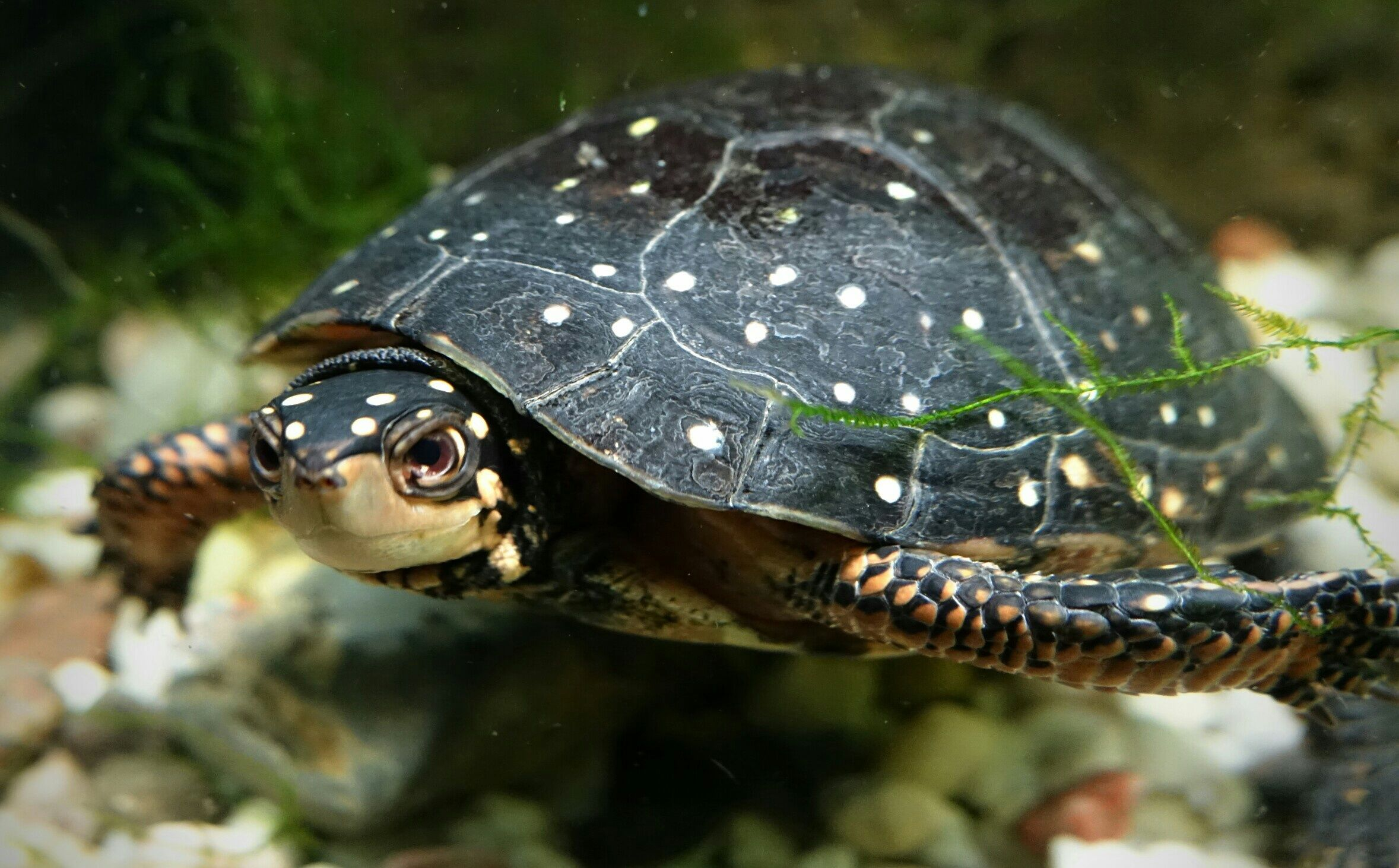 Details on what do sea turtles eat