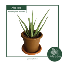 Load image into Gallery viewer, Aloe Vera
