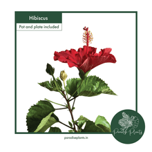Load image into Gallery viewer, Hibiscus