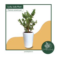 Load image into Gallery viewer, Lucky Jade Plant
