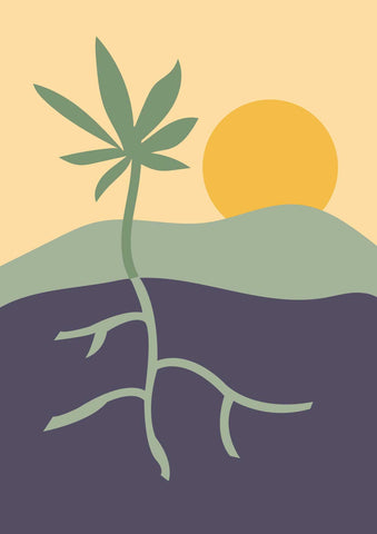 illustration of a hemp plant growing in the soil with the sun in the distance
