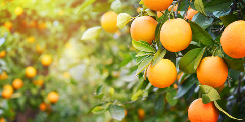 Power Gummies - Oranges are the best food to eat during period that helps in reducing period cramps