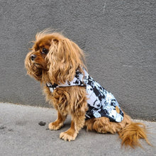 Load image into Gallery viewer, cavalier king charles coat