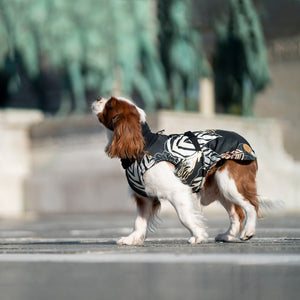 adjustable dog coat in all sizes