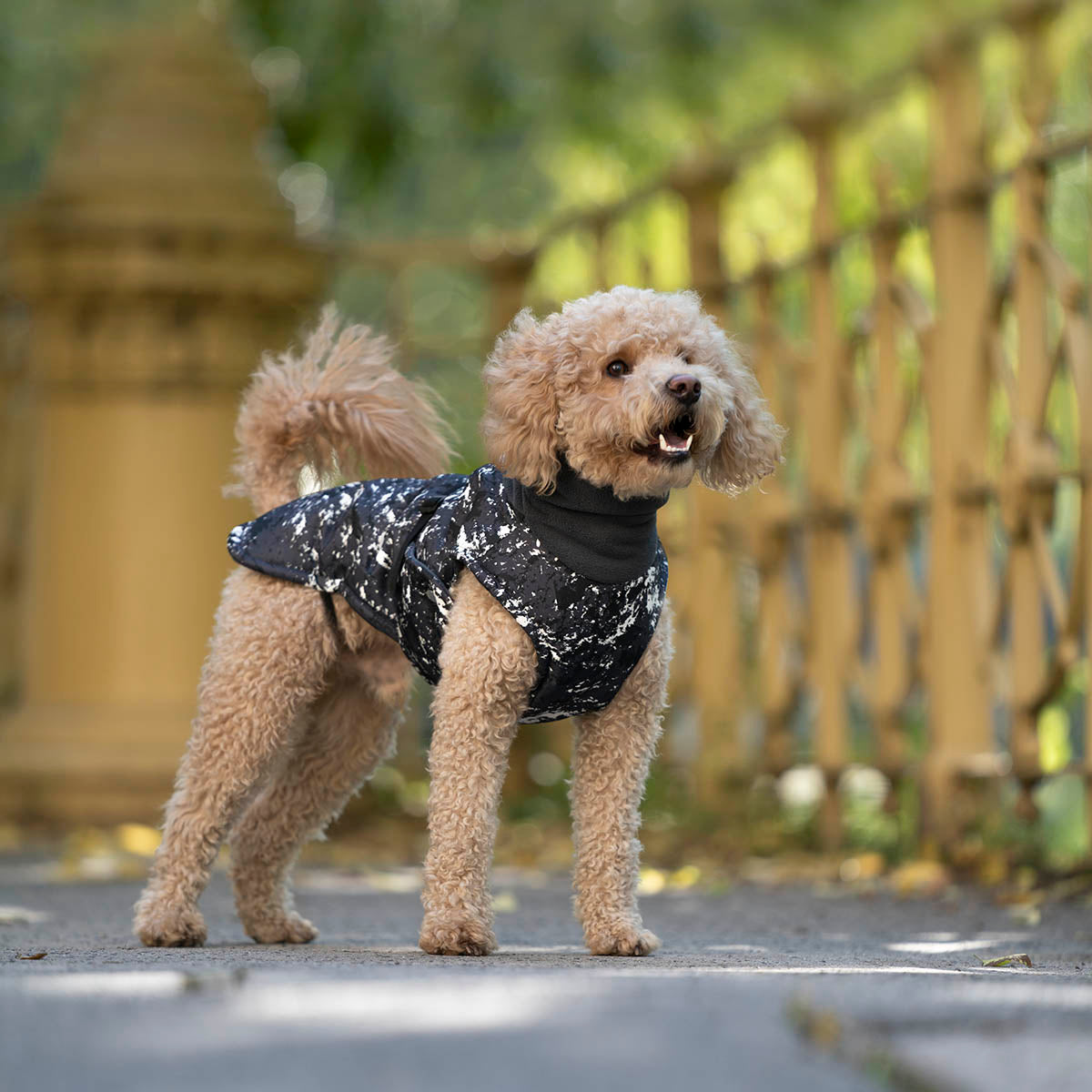 cockapoo wintercoat, cockapoo coat