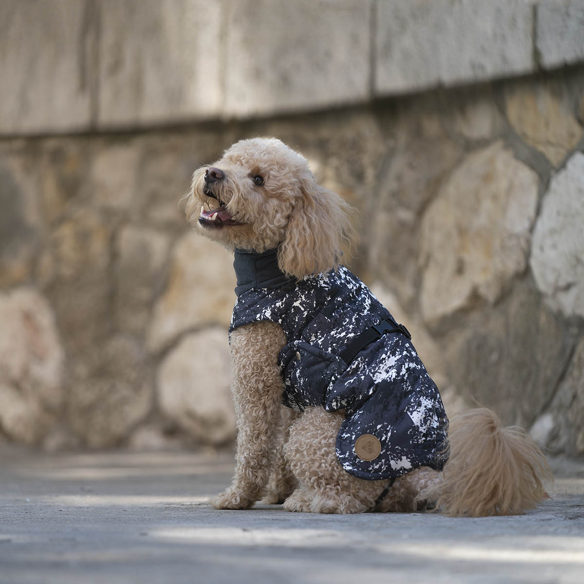 poodle wintercoat