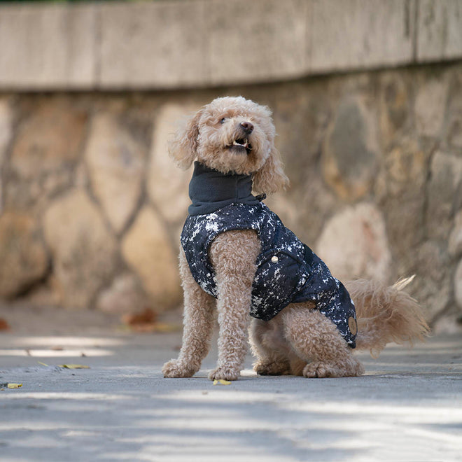 cavapoo wintercoat
