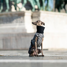 Load image into Gallery viewer, olaszagár kabát, coat for italian greyhounds