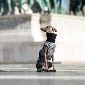 olaszagár kabát, coat for italian greyhounds