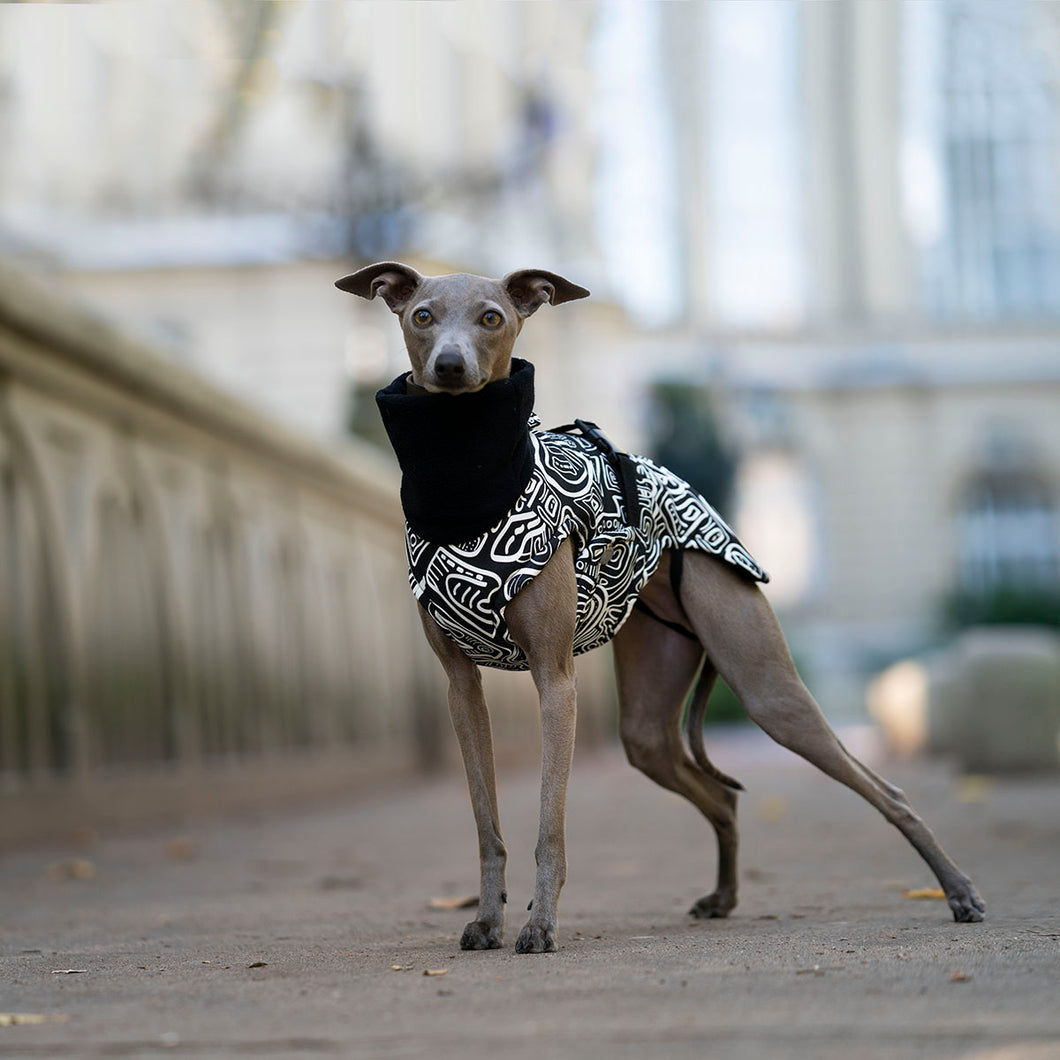 italian greyhound wintercoat